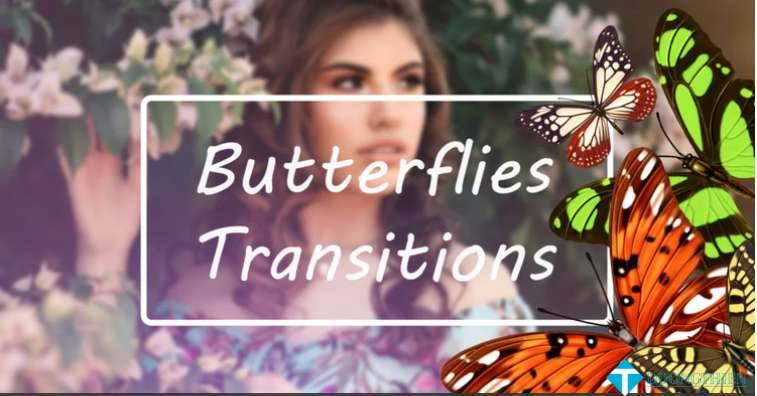 Butterflies Transitions 227558